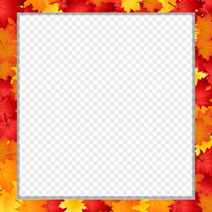 Vector square photo frame with fallen autumn maple leaves isolated with copy space