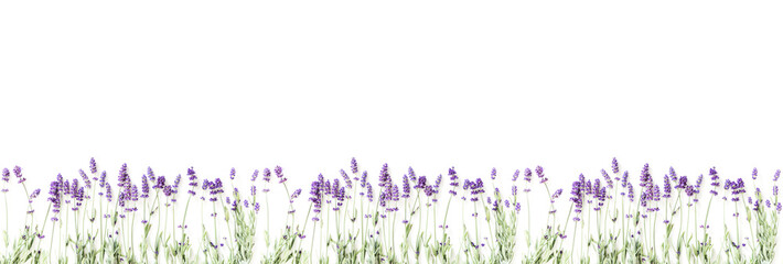 Foto op Canvas Lavendel Flowers composition. Frame made of fresh lavender flowers on white background. Lavender, floral background. Flat lay, top view, copy space, banner