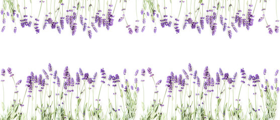 Keuken foto achterwand Lavendel Flowers composition. Frame made of fresh lavender flowers on white background. Lavender, floral background. Flat lay, top view, copy space, banner