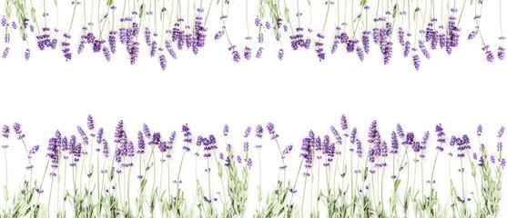 Flowers composition. Frame made of fresh lavender flowers on white background. Lavender, floral...