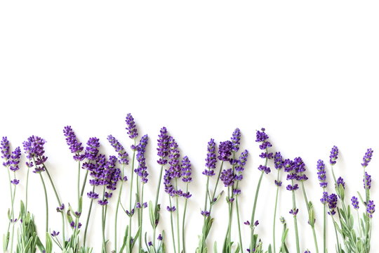 Flowers composition. Frame made of fresh lavender flowers on white background. Lavender, floral background. Flat lay, top view, copy space