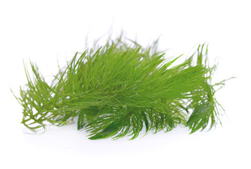 Green hydrilla isolated on white background (hydrilla)