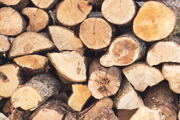 Wall Mural - Firewood background