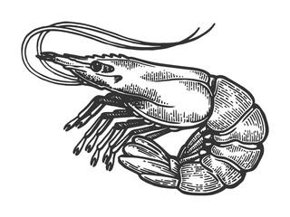 Shrimp sea Caridea animal engraving vector illustration. Scratch board style imitation. Black and white hand drawn image.
