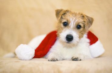 Christmas happy pet dog puppy with Santa Claus hat