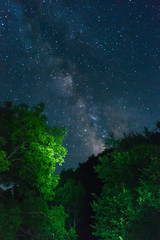 Milky Way over green trees
