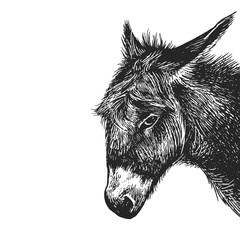 Realistic portrait of farm animal Donkey. Vintage engraving. Black and white hand drawing. Vector