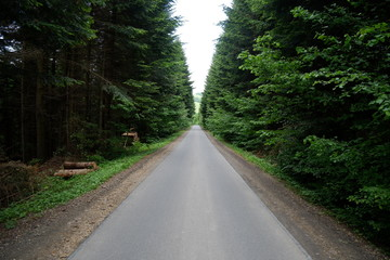 Way in forest