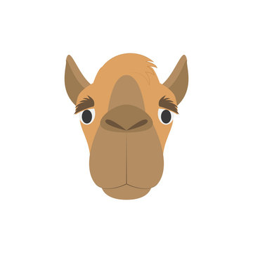 Camel face in cartoon style for children. Animal Faces Vector illustration Series