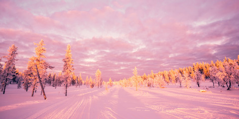 Fototapete - Snowy landscape, pink sunset light, frozen trees in winter in Saariselka, Lapland, Finland