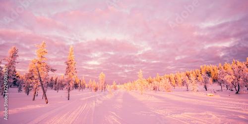 Wall mural Snowy landscape, pink sunset light, frozen trees in winter in Saariselka, Lapland, Finland