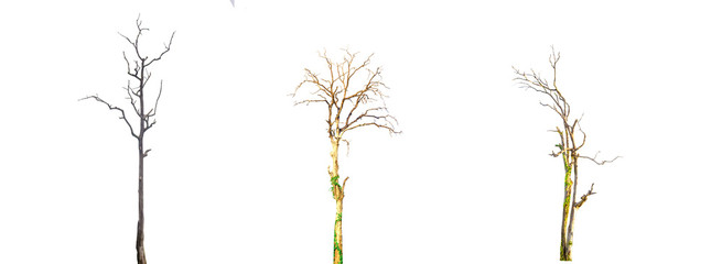 Isolated dead tree on a white background