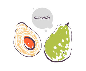 Vector hand drawn illustration of fresh raw avocado vegetable isolated on white background. Sketch style. Healthy food element. Good for menu, banner, packaging design etc.