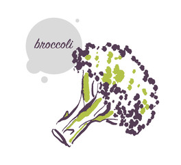 Vector hand drawn illustration of fresh raw broccoli vegetable isolated on white background. Sketch style. Healthy food element. Good for menu, banner, packaging design etc.