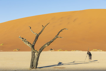 Namibia, Namib Naukluft, Namib Desert, Dead Vlei, tourist photographing dead acacia on clay pan