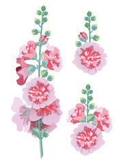 Flowers mallow in vector