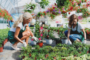 Two florists in greenhouse