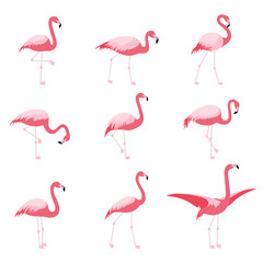 Foto op Plexiglas Flamingo Set of isolated pink flamingoes, tropical flamingo