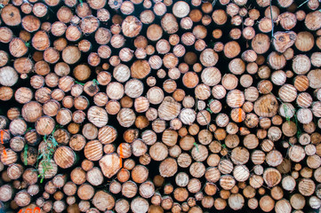Wood texture background have many log that cut from small tree