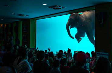 Elephant diving in glass pool