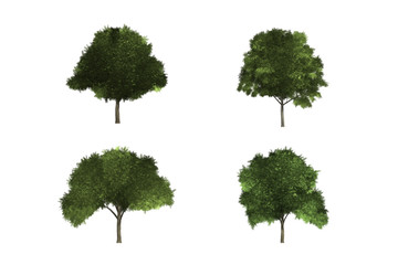 Wall Mural - tree white background isolated  green wood leaf