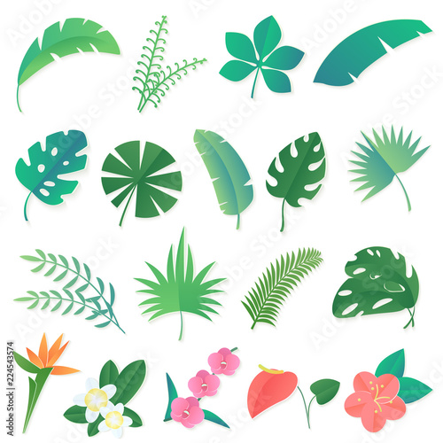 Vector Cartoon Set Of Isolated Tropical Leaves Palm Banana Leaf