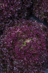 harvest fresh bio salad