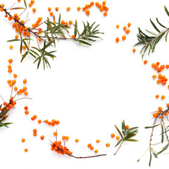 Fototapete - Frame of sea-buckthorn  isolated on white background, flat lay, top view.