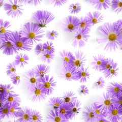 Seamless pattern of fresh wildflowers. Flowers alpine aster isolated on white background, top view, flat layout.