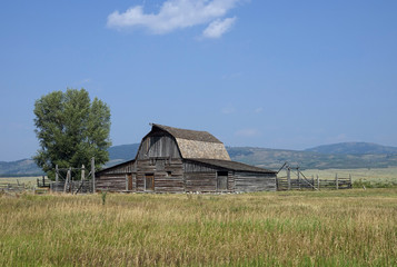 historic rustic wooden barn at Mormon Row Historic District, Grand Teton National Park, WY, USA