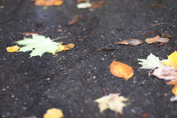 Drops of rain water on a fresh asphalt in the autumn, floating autumn leaves