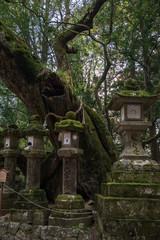 奈良 -  奈良公園