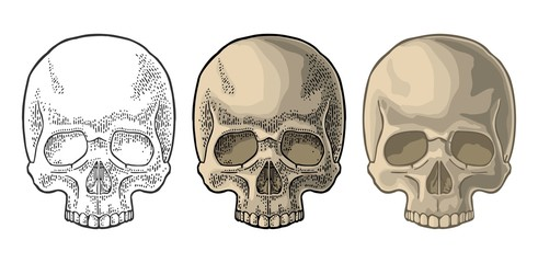 Skull human. Black vintage vector illustration isolated on white background