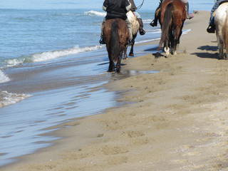 Foto op Aluminium Paardrijden Men riding horses on the beach . Horseback riding on mediterranean coastline . Tuscany, Italy