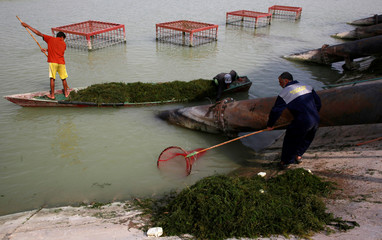 Workers clean water from Herbs, at Al Bida water tanks project due to water pollution in Basra