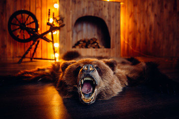 Skin of dead bear lies on floor in interior taxidermy.