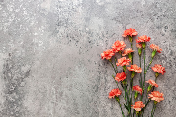 Salmon-colored carnations on the background of old concrete
