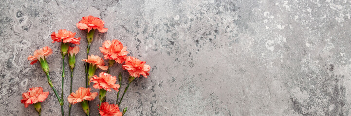 Panorama with pink carnations in the background of old concrete in Wabi Sabi style
