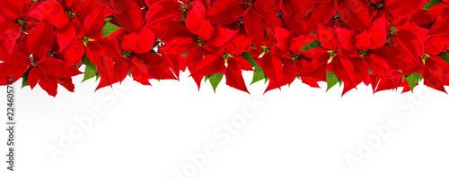 Christmas Red Flower Poinsettia Border White Background Stock Photo
