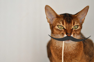 Abyssinian cat with a paper mustache on a white background. Pet cat closeup with copyspace