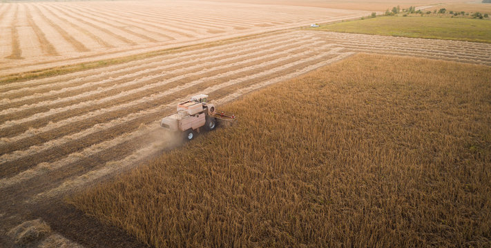 Harvester machine working in field . Combine harvester agriculture machine harvesting golden ripe soybean field. Agriculture. Aerial view. From above.