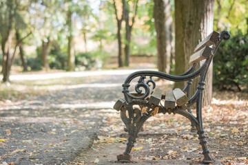 Wooden empty bench in the autumn park, autumn landscape