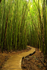 Bamboo forest in Haleakala State Park on the Road to Hana on Maui.