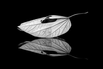 The dry leaves and reflection / Purple Orchid Tree leaf