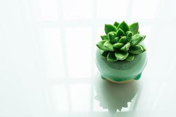 A good time /Green, fleshy plants