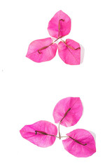 Fresh Bougainvillea petals/Romantic beautiful background material