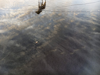 dog reflected in low tide, cloud texture, shallow ripples