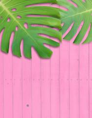 モンステラ 癒し 熱帯植物 植物 葉