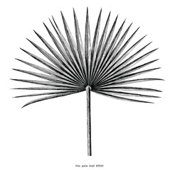 Fan palm leaf hand draw vintage engraving clip art isolated on white background