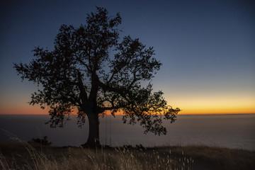 Zen Tree against Colorful Horizon